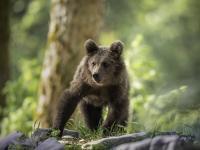 Fotowyprawa: Południowa strona Alp