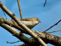 Terenowe kursy rozpoznawania ptaków