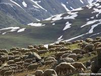Górskie jeziora Kaszmiru