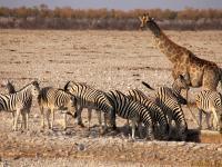 Diamenty Namibii