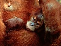 W krainie duchów i orangutanów