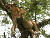 Uganda - w królestwie zwierząt