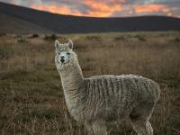 Cordillera Blanca i Cordillera Huayhuash – górski raj dla każdego