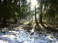 Białoruskie puszcze i bagna