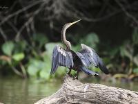 Pantanal - tropem jaguara i dzikich amazonek