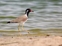 Ptasie bogactwo Emiratów