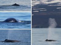 Islandia - wieloryby, wulkany, lodowce