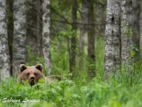 Finlandia - fotowyprawa przyrodnicza
