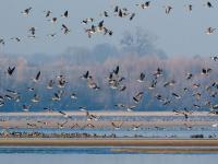 Ptaki - polska ściana zachodnia
