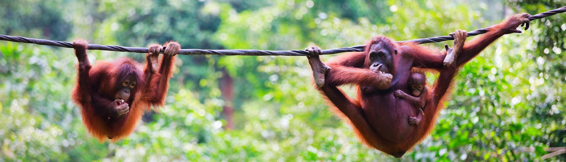 Borneo Experience