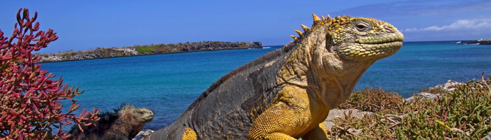 zz_Peru i Wyspy Galapagos