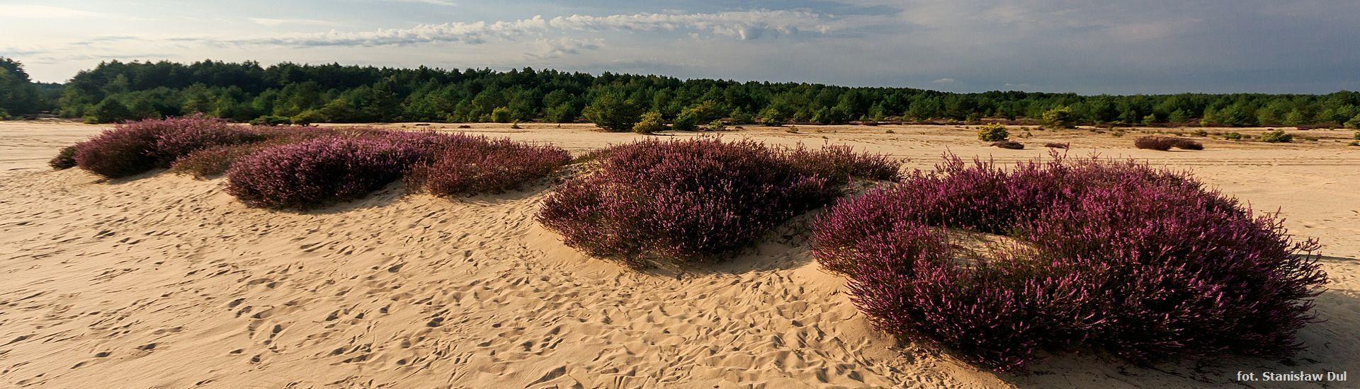 W pustyni i w puszczy