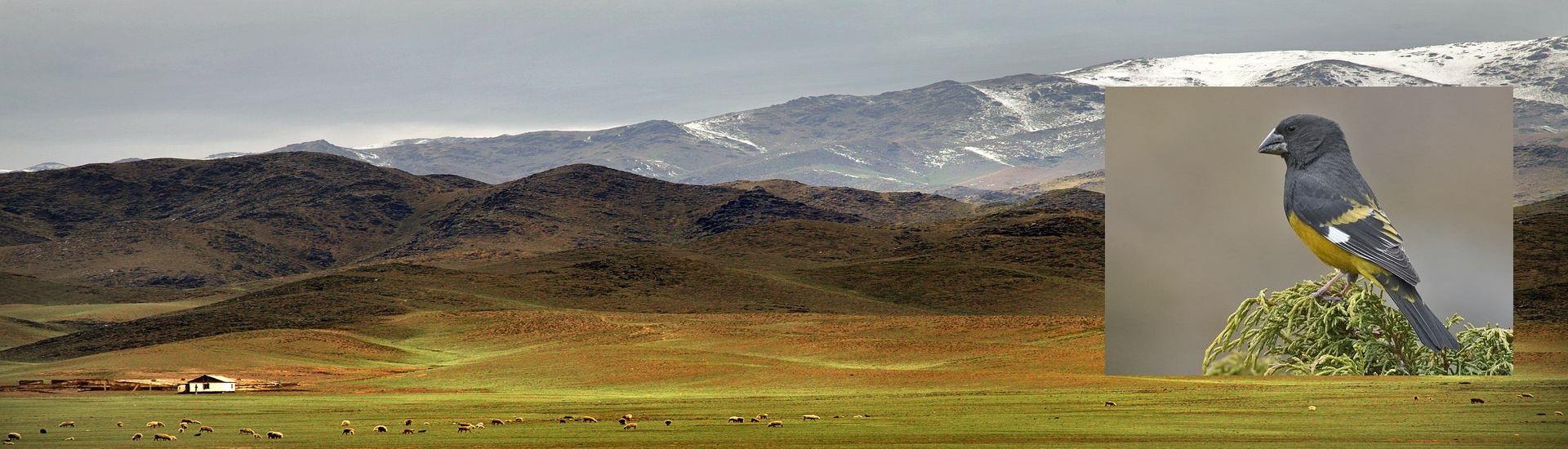 Stepy i góry Kazachstanu
