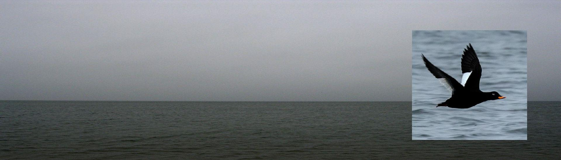 Weekend z ptakami - Bałtyk