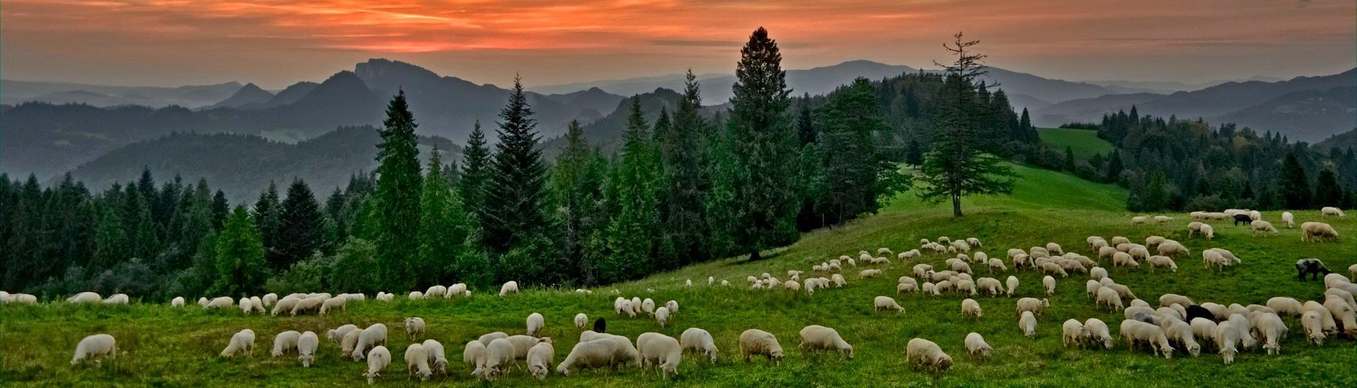 Na beskidzkich szlakach - w górach Polski