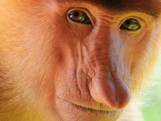 Borneo - odkrywanie Nusantary