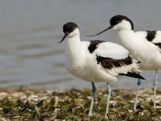 Ptasie perły Niderlandów