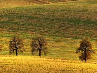 Pola jak dywany – fotoweekend na Morawach