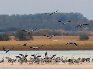 Weekend z ptakami - Jeziorsko
