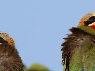 Ptaki Afryki Wschodniej - wyprawa miłośników przyrody