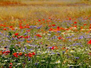 Kwietne łąki Ponidzia